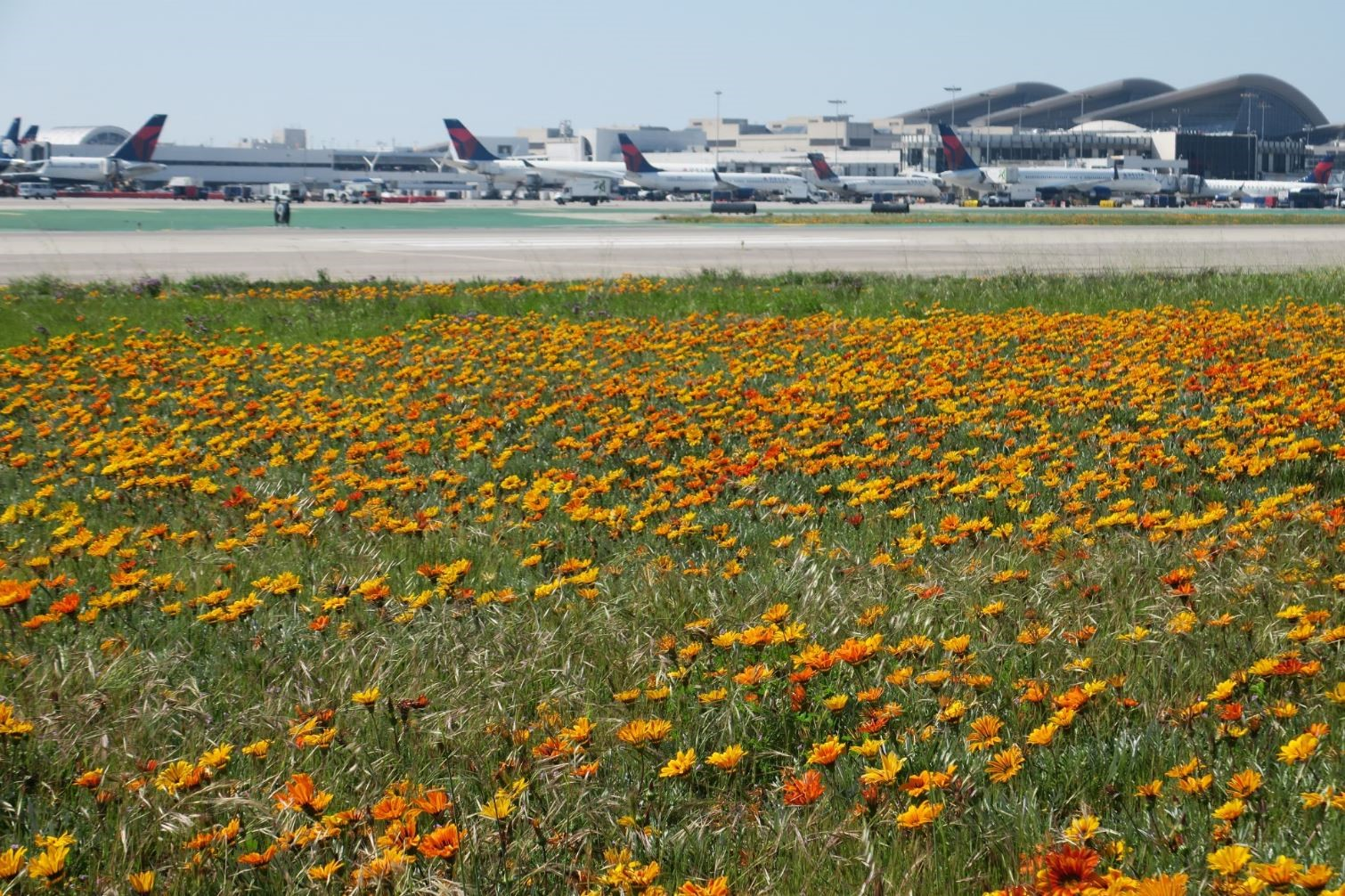 Airfield with spring flowers