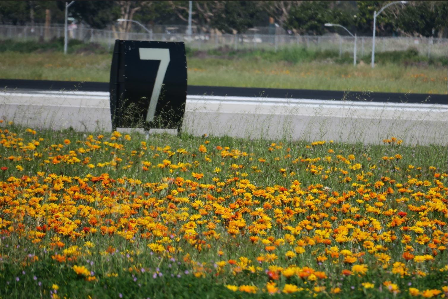 Airfield with flowers
